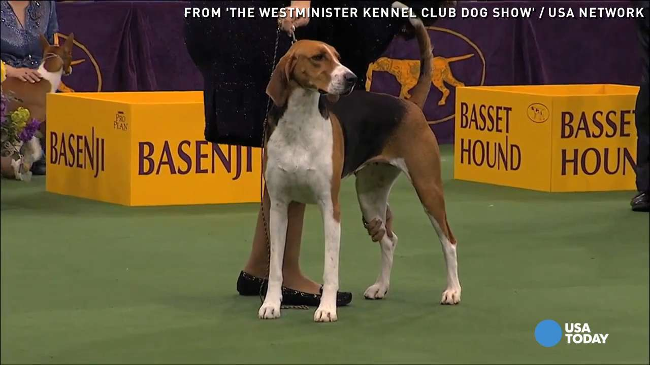 Critic's Corner: Dogs strut for 140th Westminster show