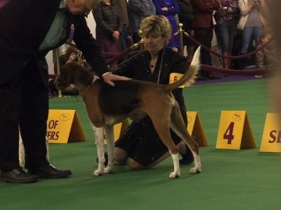Dogs Compete in Famed Canine Competition