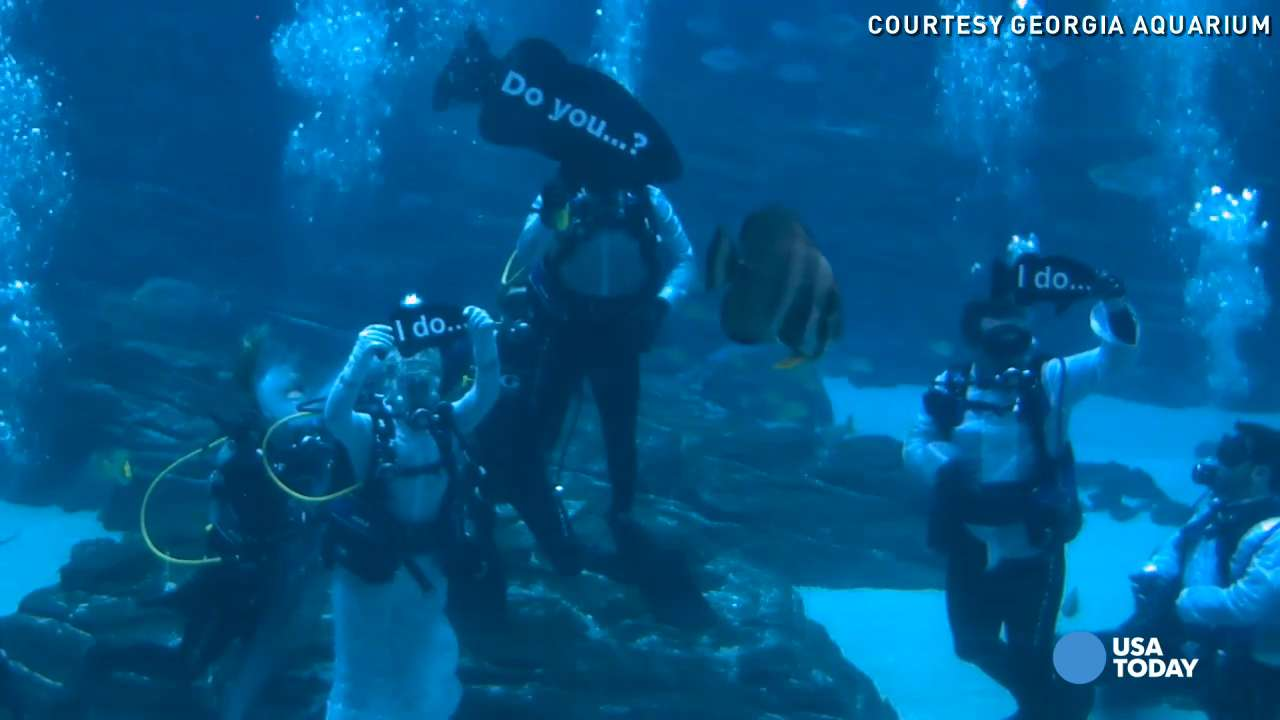 Crystal and Justin Reynolds exchanged vows in 6.3 million gallons of water, surrounded by whale sharks and manta rays. It was the first underwater wedding at the Georgia Aquarium.