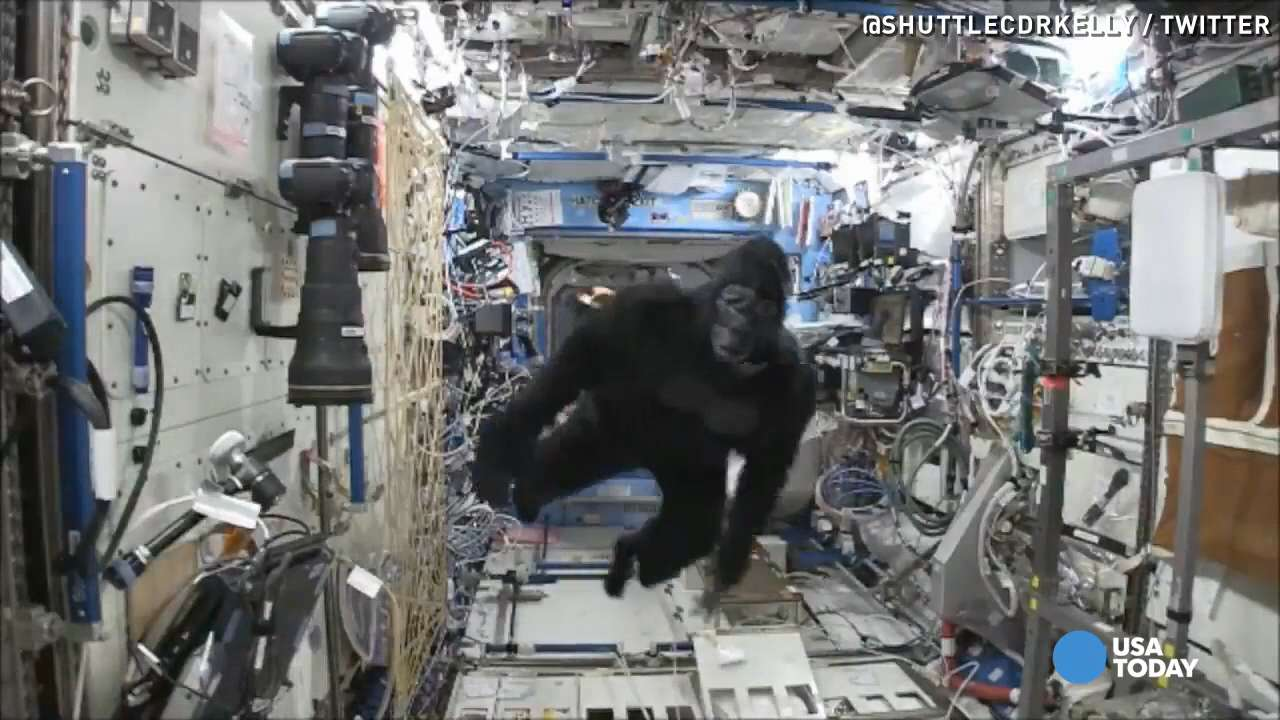 A NASA camera captures astronauts trying to away from a gorilla who was somehow able to get aboard the International Space Station