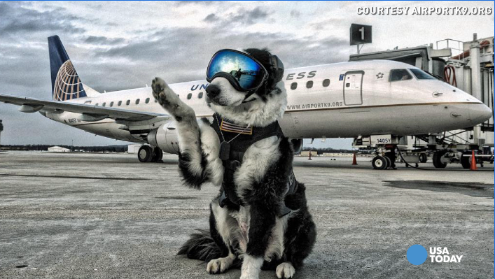 This airport K-9 is as tough as TSA