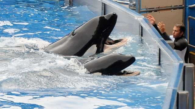 SeaWorld admits its employees spied on animal rights activists