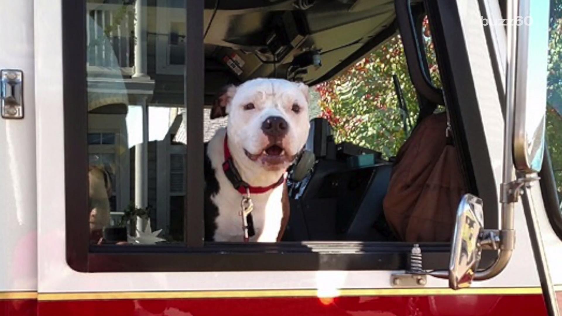 Puppy rescued from fire is now honorary firefighter and community superstar