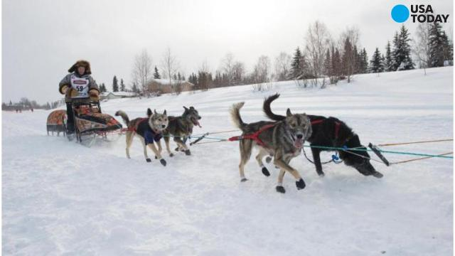 Iditarod sled dog killed in apparent snowmobile attack