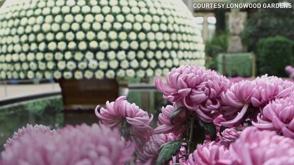 Giant botanical garden wows with 11,000 types of plants