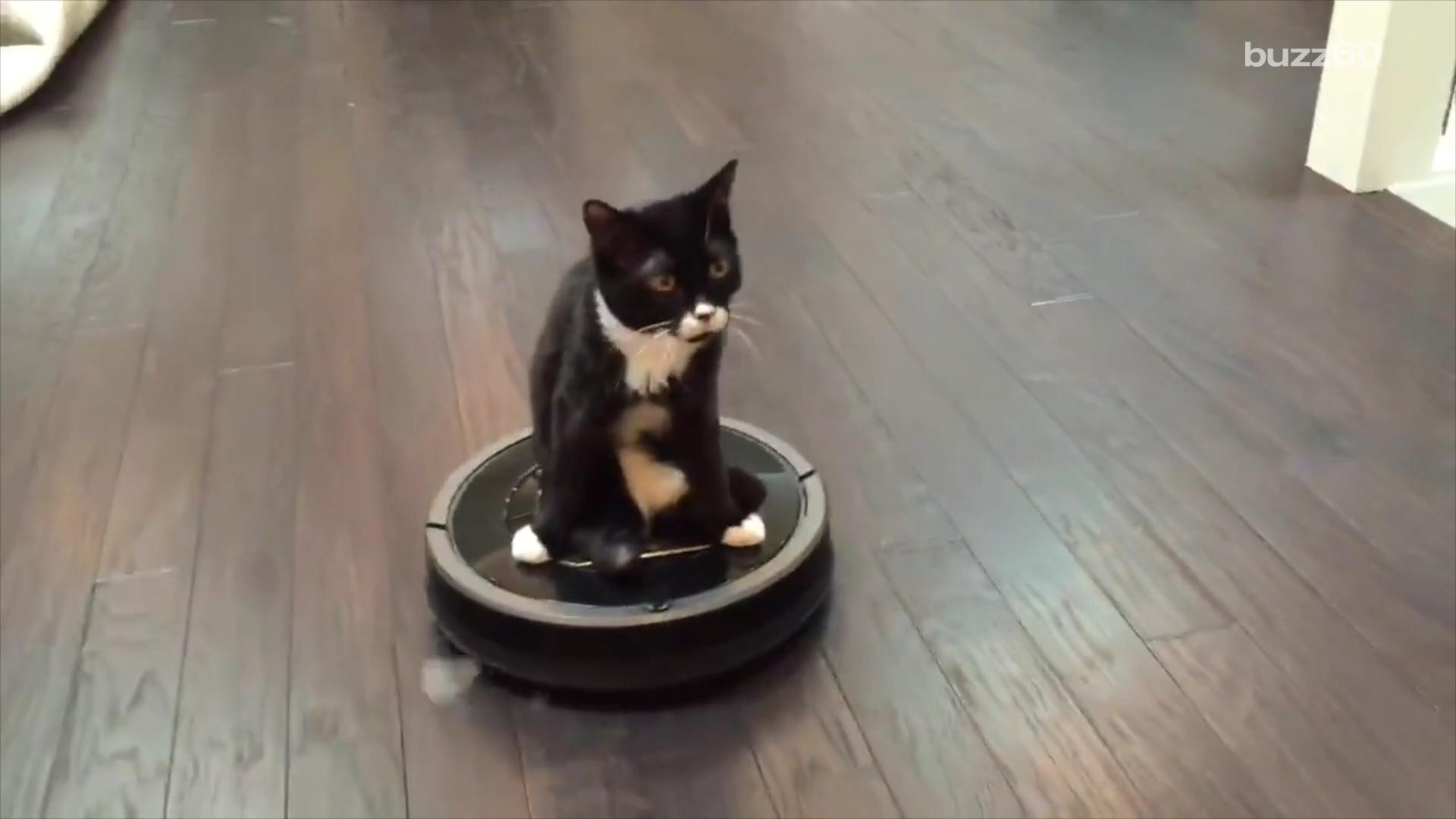 Two-legged cat rides Roomba while waiting for bionic legs