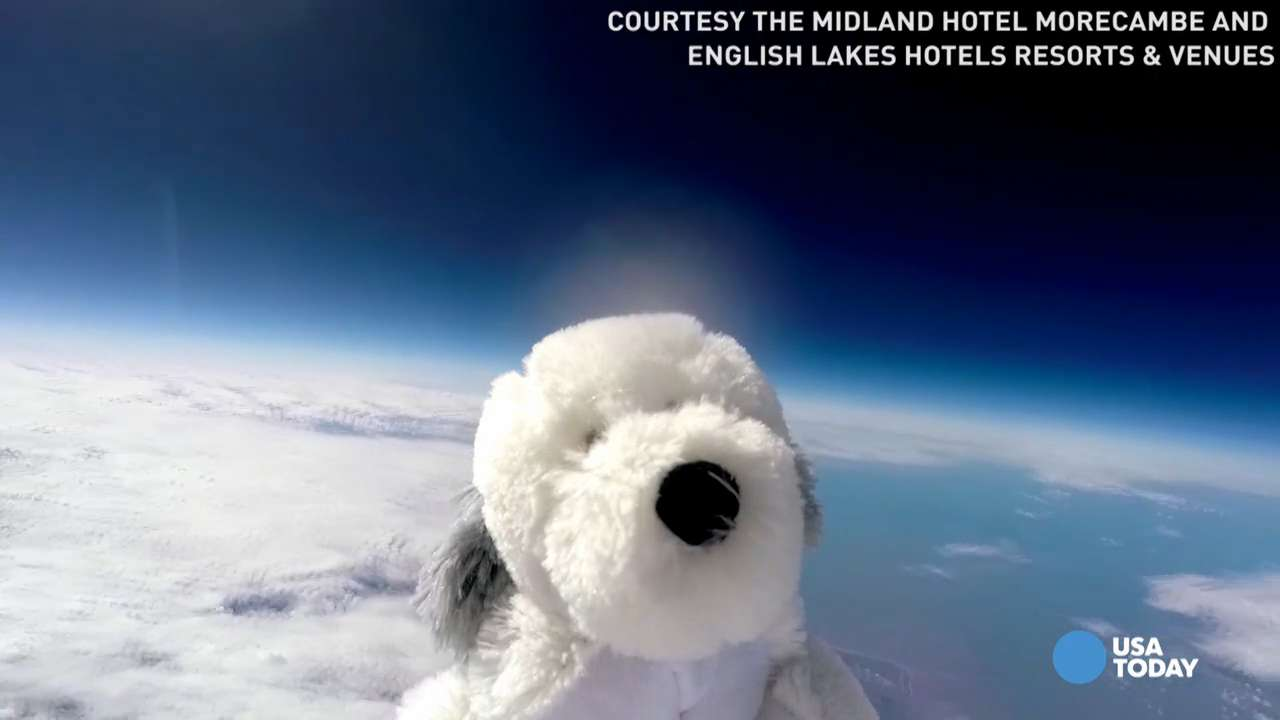 A stuffed toy dog and GoPro go on a space adventure