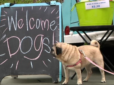 Food truck catering to dogs has chicken feet on the menu