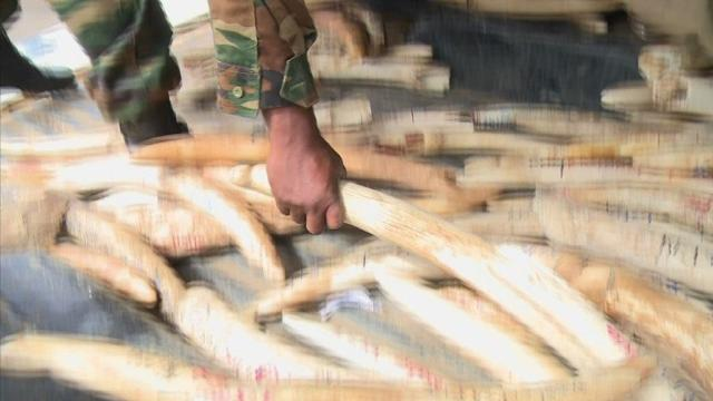 Kenya prepares for ivory giant burn