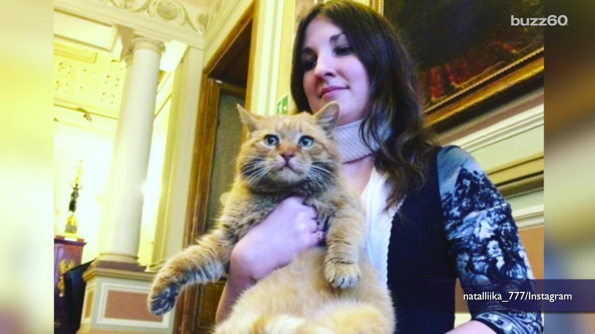 Russian cat employed by museum and paid in caviar