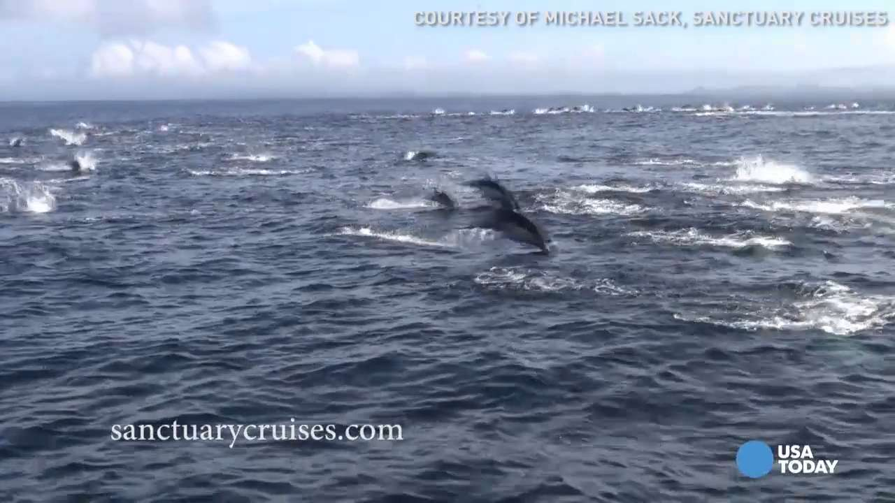 Watch dolphins stampede away from hungry killer whales