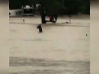 Horses struggle to stay above water in Texas