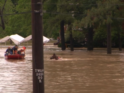 Raw: Horse Rescued From Texas Flood