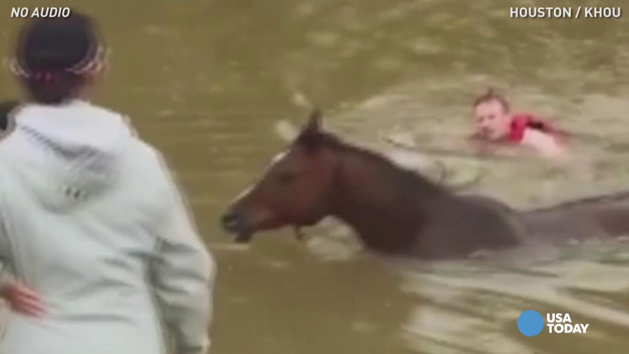 Horse pulled to safety from high floodwaters
