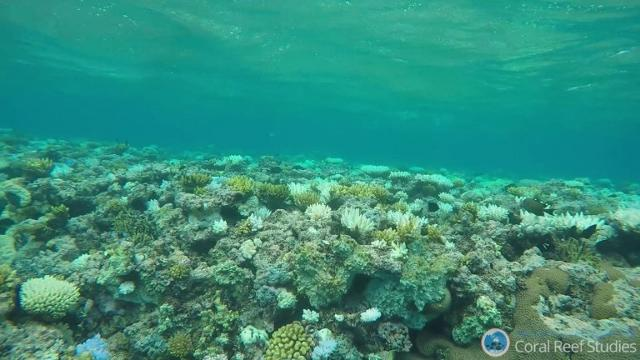 This undated photo released by the Great Barrier Reef Marine Park Authority on April 23, 2009, shows a bleached section of Australia's Great Barrier Reef.