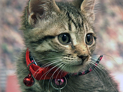 Kittens go for gold in Hallmark's summer games