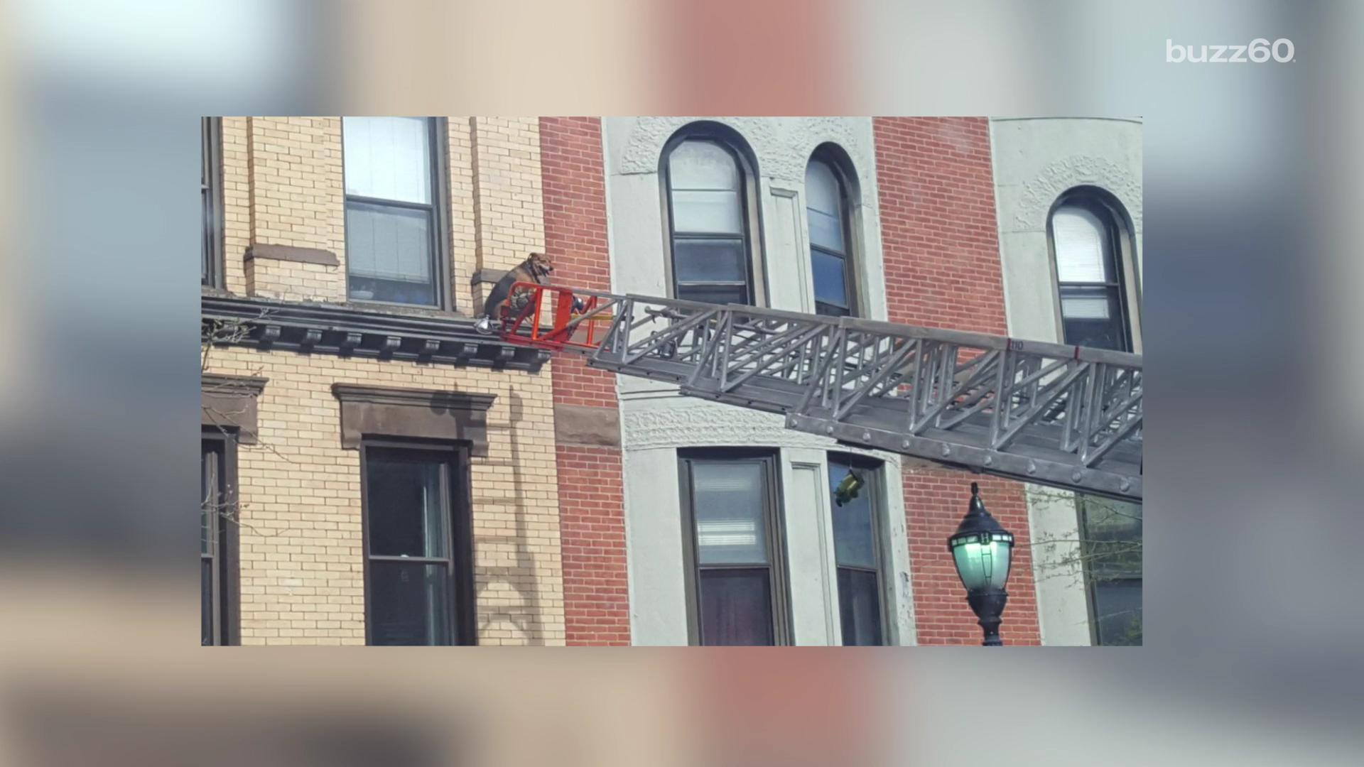 Dog rescued after sunbathing on 3rd story window ledge
