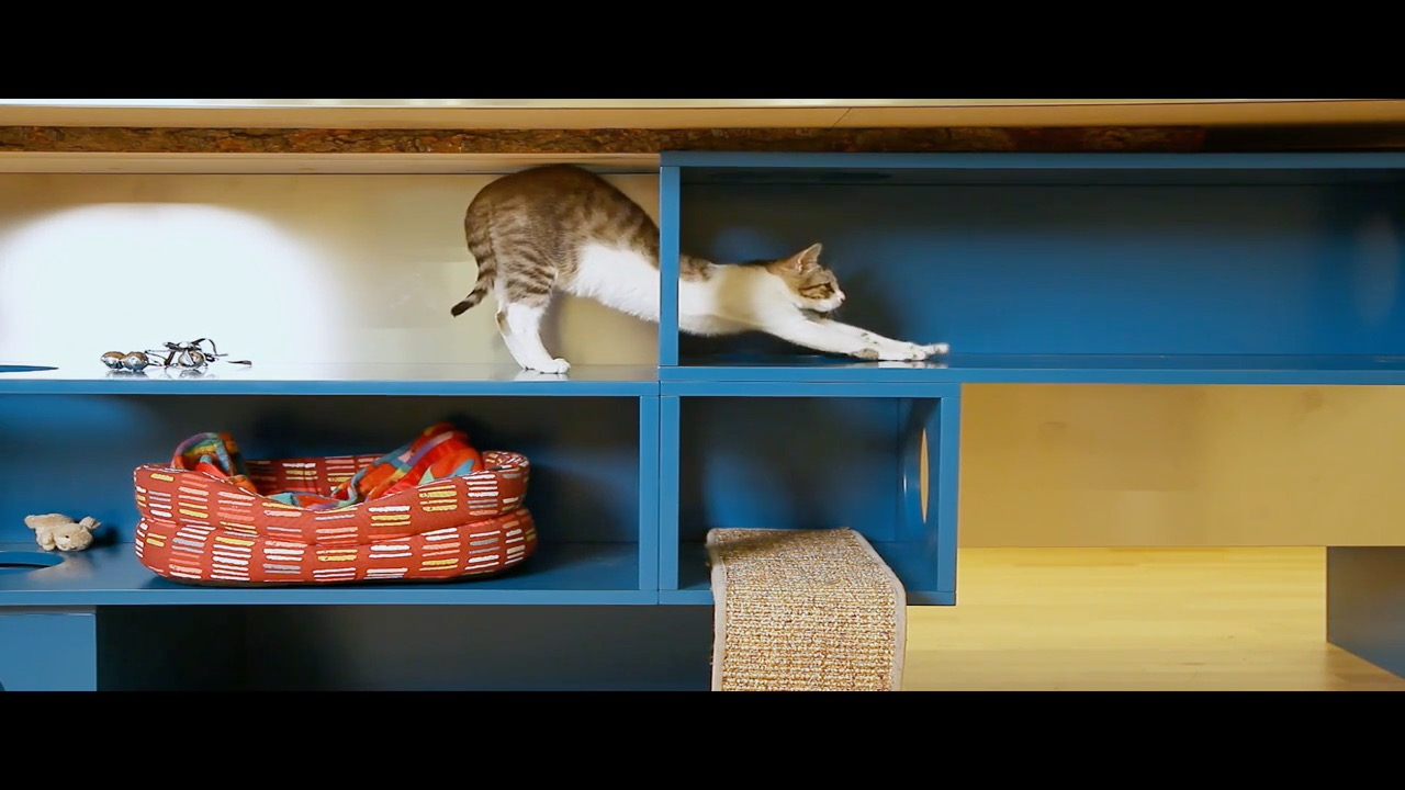 Kitchen designed for cats is purrrfect for cat lovers