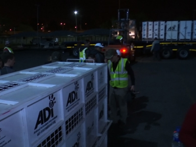 A group of lions rescued from South American circuses arrived in South Africa on Saturday, where they will be released into a bush sanctuary for big cats. (May 1)