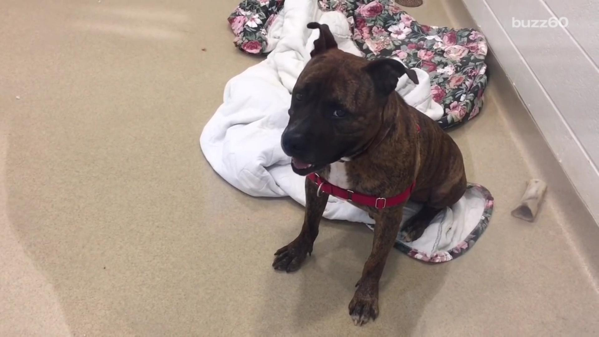 Crying Shelter Dog from Viral Video Gets Adopted, Making Us Cry