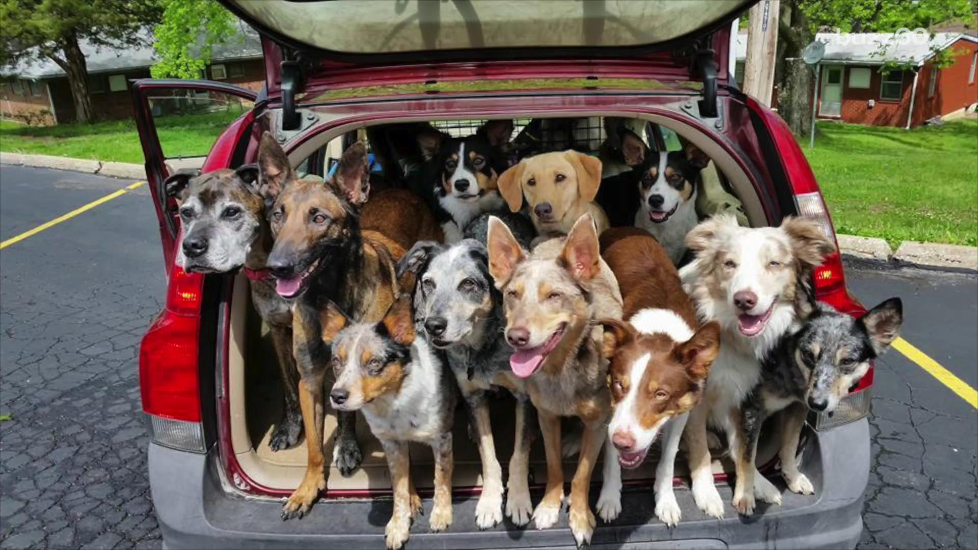 Cops called after car packed with 20 dogs spotted
