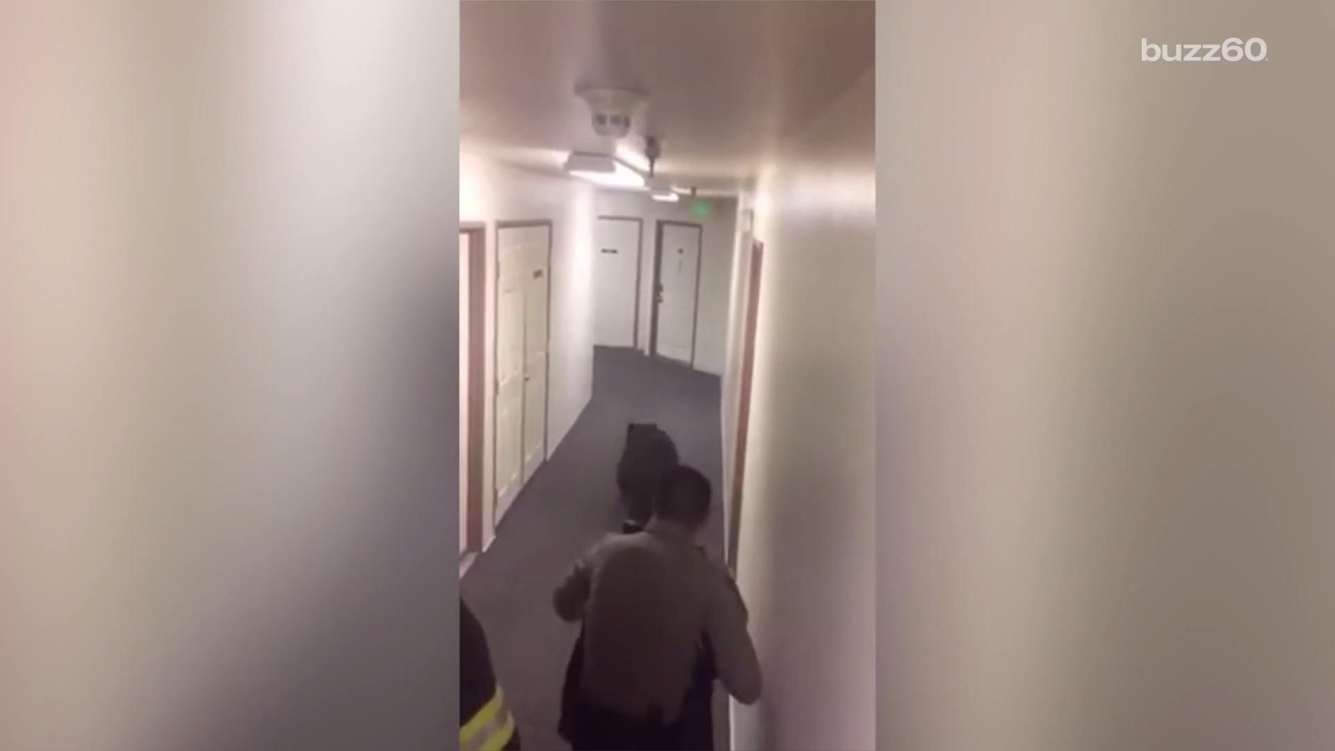 Surprised firefighters remove bear from apartment