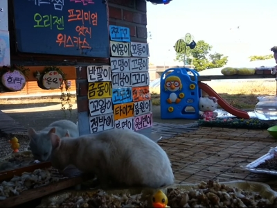 Stray cats have their own show in South Korea