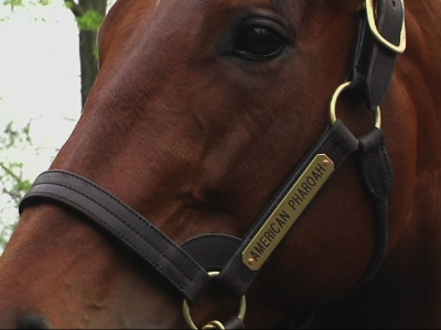 American Pharoah's New Role After Triple Crown