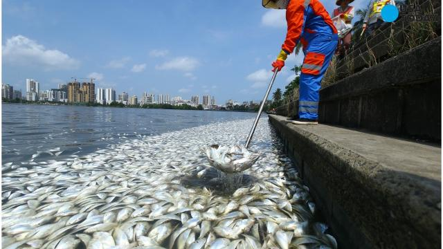 35 tons of dead fish wash up in China lake