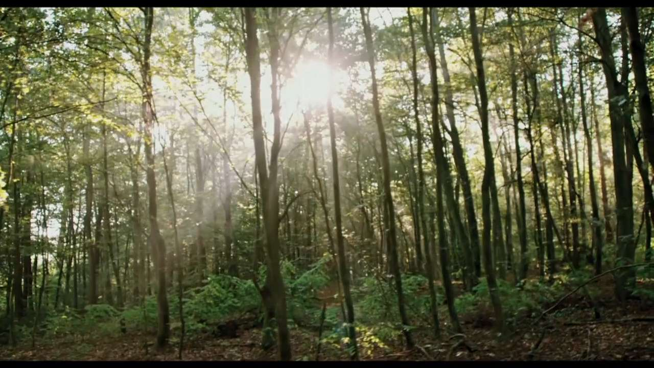 Trailer: 'The Woods'