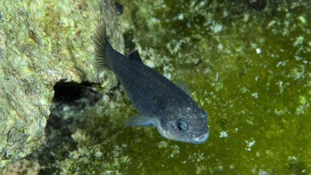 Drunk dudes may have killed one of the rarest fish in the ...