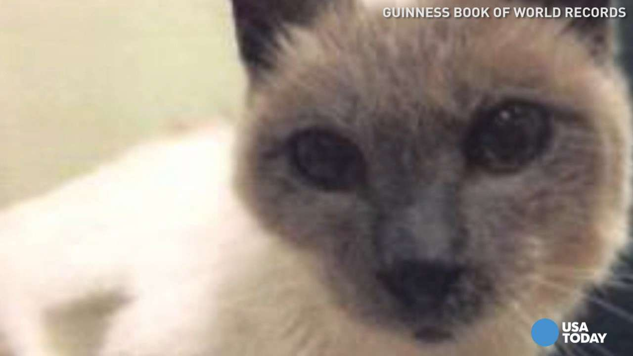 World's oldest cat didn't live to see title