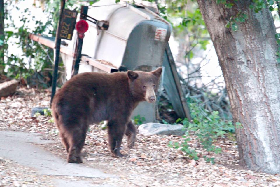 Black bear spotted strolling through neighborhood