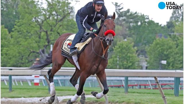 Nyquist, the 3-5 favorite in the field of 11 horses, bids for second leg of Triple Crown at what's expected to be a dank and dismal Pimlico. The weather forecast for Saturday's Preakness Stakes is rainy.