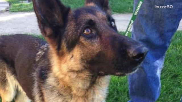 Police named a dog Freeway Frida after rescuing her from living on the highway median she called home for at least five weeks.