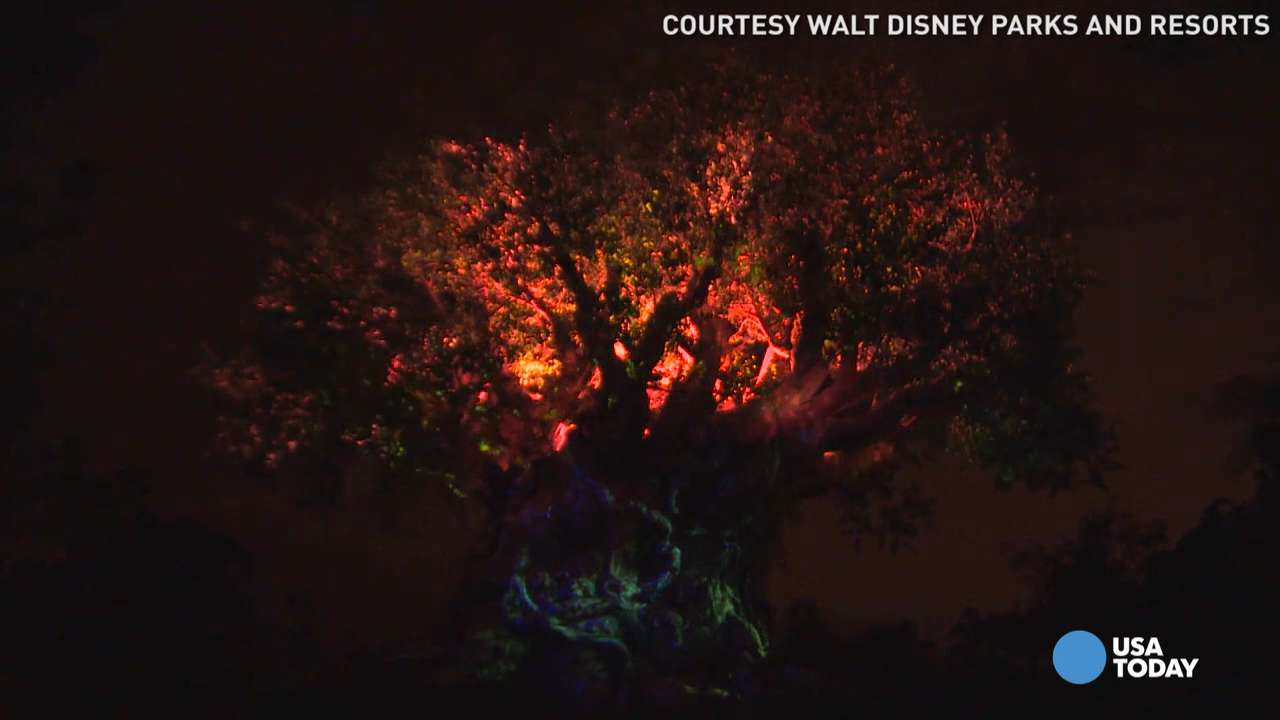 Disney's Animal Kingdom comes alive at night