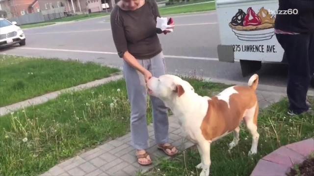A pit bull anxious for a tasty summer treat was incredibly patient, waiting his turn at the ice cream truck. Paula Vasan (@paulavasan) has the details.