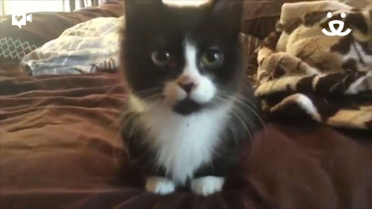 Mouse the kitten was born with a congenital deformity: his front legs were not developing normally. Mouse was eventually adopted into a loving home where he is living a happy life. Video provided by Best Friends Animal Society.
