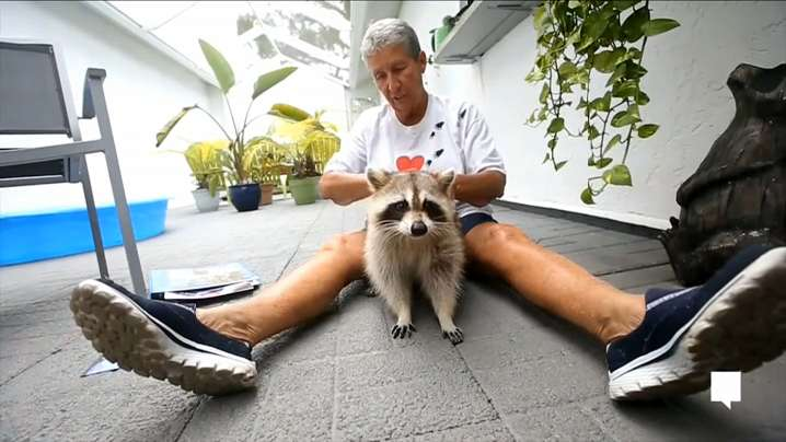 Dorothy began caring for Trouper, an 8-year-old raccoon, after a golfer injured the animal when it was little.