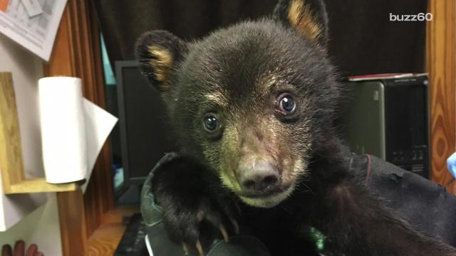Cops rescued an abandoned cub who was left alone and crying in the forest.