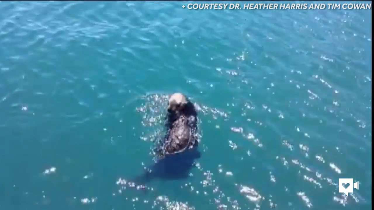 2-day-old sea otter pup reunites with mom
