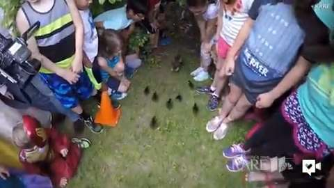 Ducklings parade out of elementary school to new life