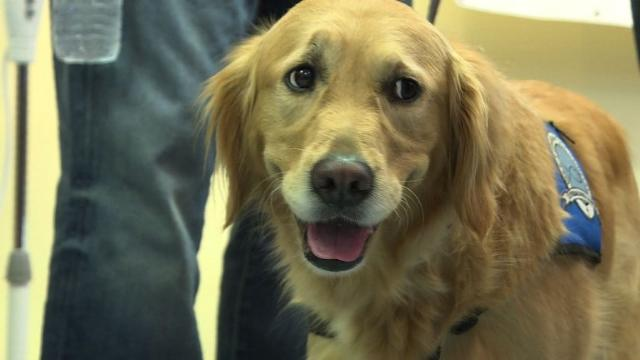 Comfort dogs arrive in Orlando after nightclub attack