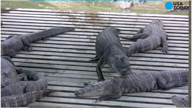 stories similar to the alligator river story