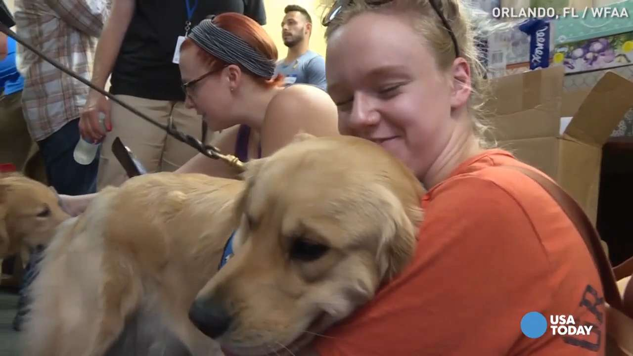 Comfort dogs bring hope, healing after Orlando shooting