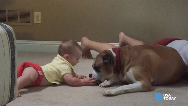 Baby and dog besties can't get enough of each other