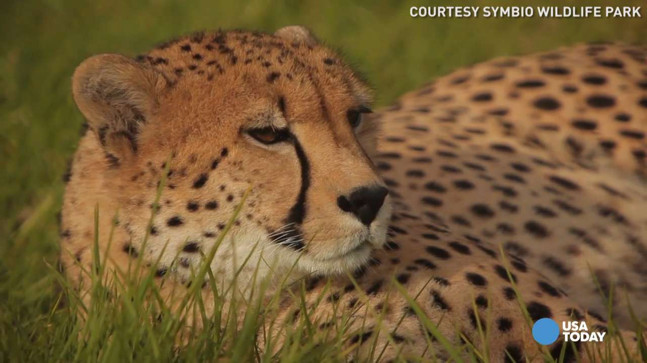 How the fastest animals in the world unwind
