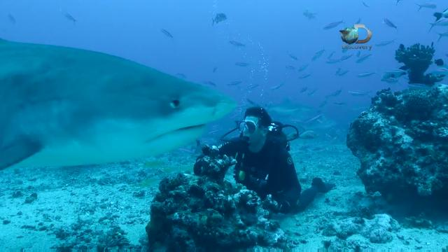 Discovery's 'Shark After Dark' host and movie director Eli Roth goes underwater with tiger sharks in Tahiti.