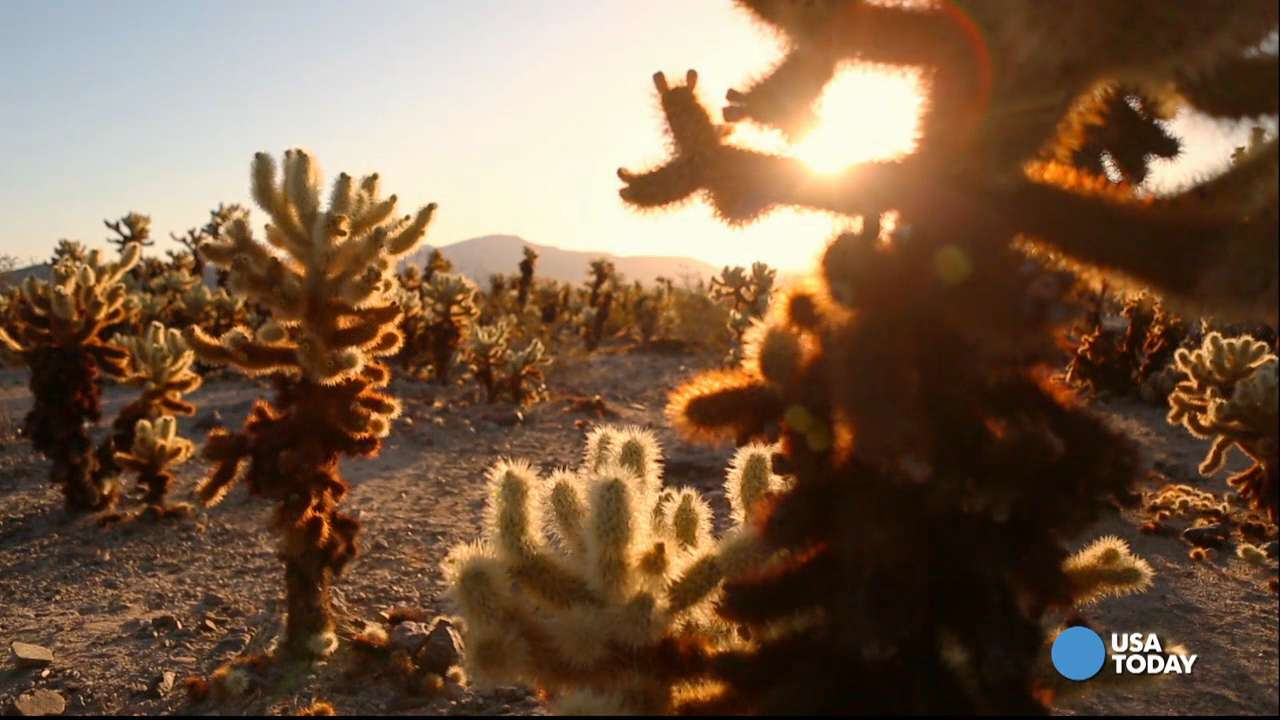 Joshua Tree National Park is breathtaking by day or night. Video shot by Marilyn Chung, The Desert Sun.