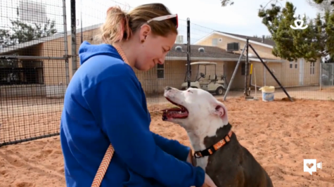 This loveable pup found her forever home after abuse